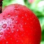 Elimina el acne en tres dias con la dieta de la manzana