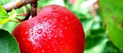 manzana-para-quitar-el-acne.jpg