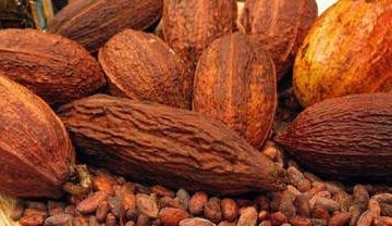 Manteca de cacao para eliminar las estrias