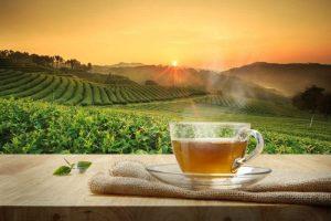 Beneficios para la salud y la belleza del te